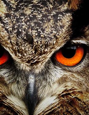 https://www.americandigitalservices.com/public2/sites/default/files/revslider/upload/agency-website-header/owl1.jpg