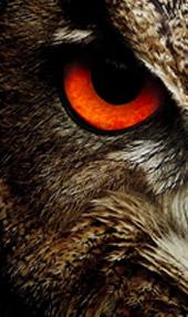 https://www.americandigitalservices.com/public2/sites/default/files/revslider/upload/agency-website-header/owl2.jpg